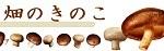 畑のきのこ〜糖尿病食のレシピ
